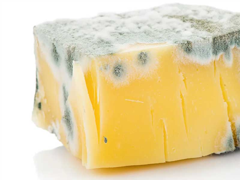 sir plijesan