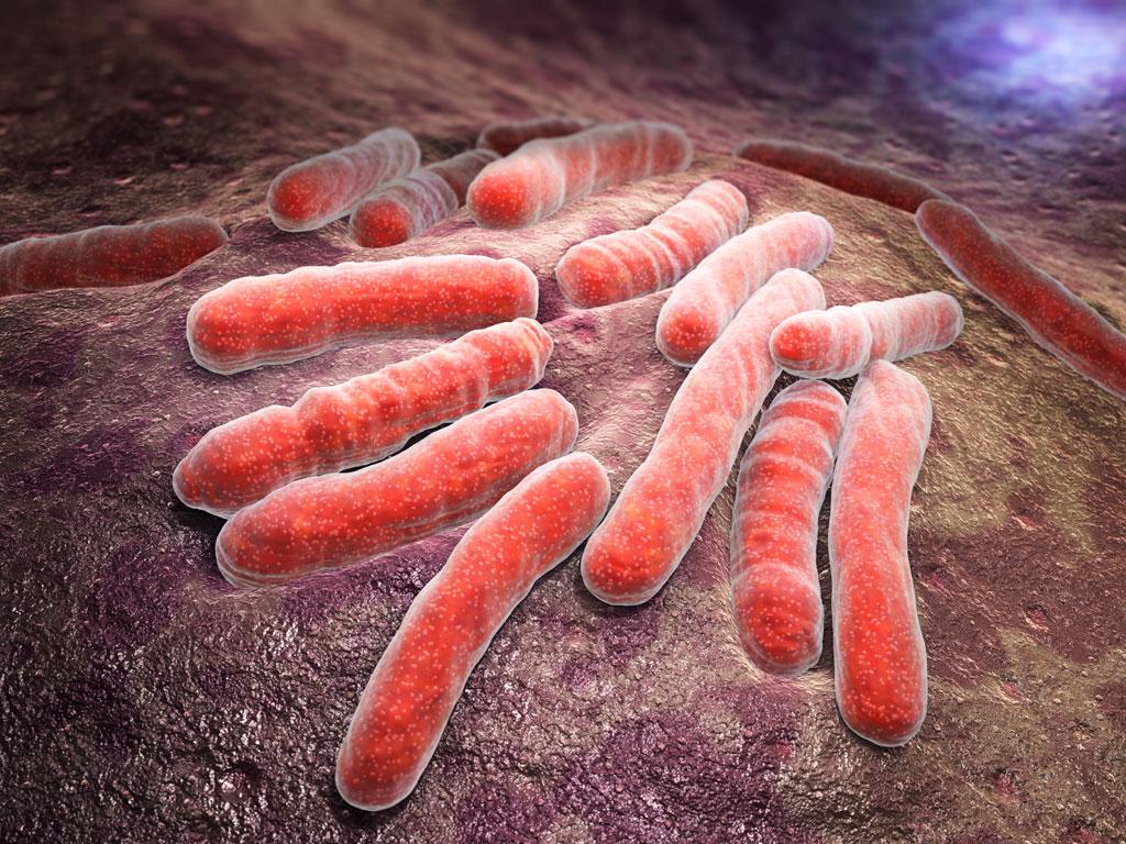 paraziti nisu bakterije