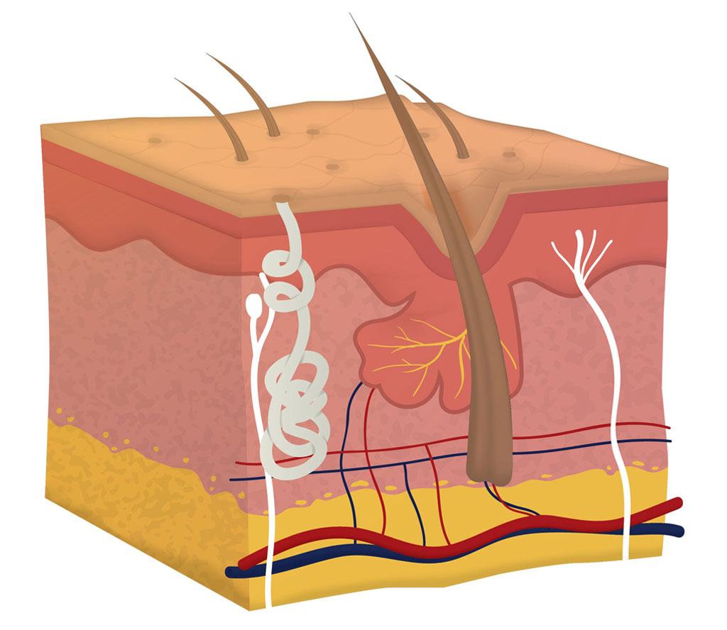 struktura kose
